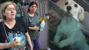 Faciadan köpekleri kurtardı !