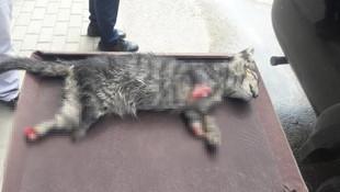 4 ayağı kesilmiş yavru kedi ölüsü bulundu