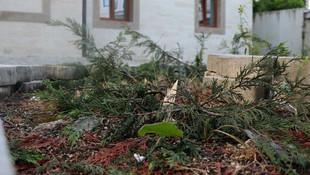 Cemaat namazdayken 31 ağacı kestiler