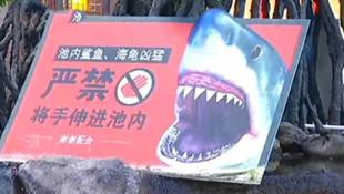 AVM'de köpekbalığı dehşeti kamerada