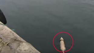 Bu köpek, denize girip saatlerce geri dönmüyordu... Sebebi ortaya çıktı