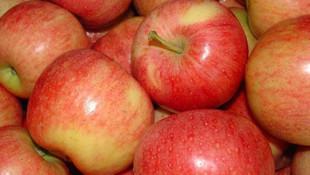 Şimdi de iğneli elma çıktı