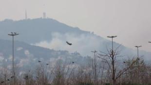 Büyükada'da yangın: 7 at telef oldu