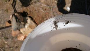 4 milyon böcek yakaladı
