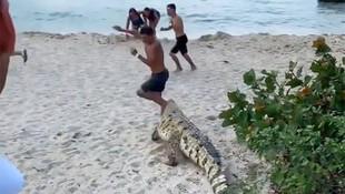 Timsah plajdakilere saldırdı