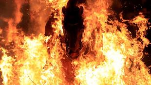 300 yıllık gelenek: Atları ateş üstünde yürüttüler