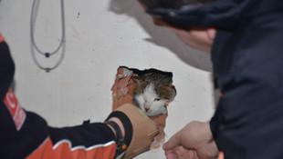 Asansör boşluğunda kalan kediyi AFAD kurtardı