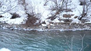 2 metreyi aşan kar onları da vurdu