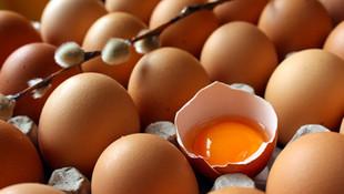 Bu tavuklar ''kanser ilacı'' yumurtluyor !