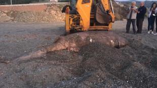 İzmir'de köpek balığı karaya vurdu
