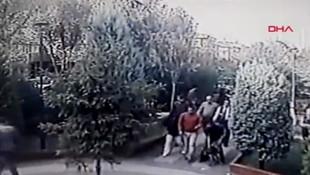 İstanbul'da yine pitbull dehşeti! 7 yaşındaki çocuk kabusu yaşadı