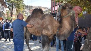 Belediye başkanı kent meydanında deve kesti