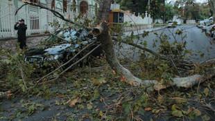 Beşiktaş'ta ağaç devrildi, yol kapandı