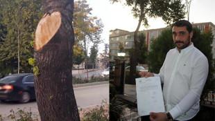 İş yerinin önündeki 2 ağacı kesti, hayatının şokunu yaşadı