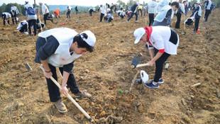 Sarıyer'de toplam 13 bin fidan dikildi