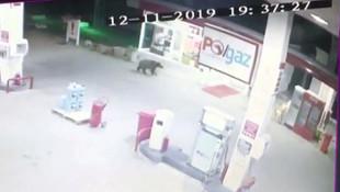 Benzin istasyonunda sürpriz misafir kamerada