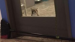 Karşınızda dünyanın en suçlu kedisi!