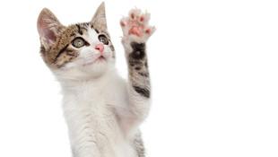 Kedisi tarafından tırmalanan kadının hayatı kabusa döndü