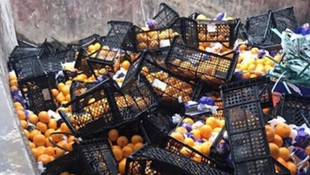 Rusya'ya gönderilen 21 ton mandalina imha edildi