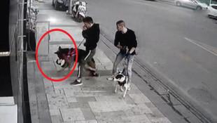 Sokak kedisini köpeğin ağzından 5 kişi zor aldı
