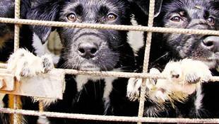 Evcil hayvanını sokağa atana 10 bin TL para cezası!
