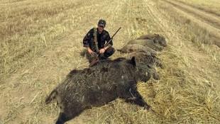 Kayseri'de dev domuz vuruldu!