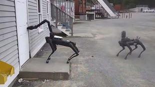Polis robot köpekleri ilk kez kullandı