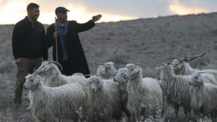 Türkiye 150 bin çoban ithal edecek!