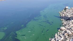 Atatürk Baraj Gölü'ndeki renk değişimi için inceleme başlatıldı