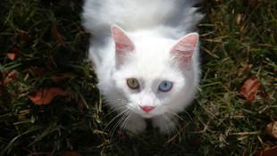 İstanbul'daki Uluslararası Mutlu Kediler Yarışması'nın birincisi o oldu