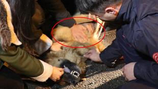 Araba çarpan köpek kurtarılamadı