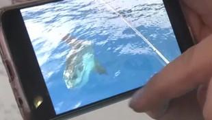 Antalya'da nadir rastlanan ay balığı görüntülendi