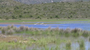 İzmir'deki İris Gölü de mi imara açılıyor ?