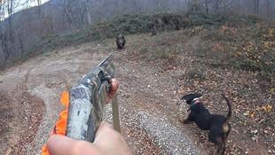 Bu görüntüler Türkiye'den! Avcı, az kalsın av oluyordu!