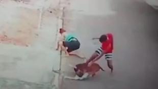 Sokakta Pitbull dehşeti ! Çocuğa böyle saldırdı