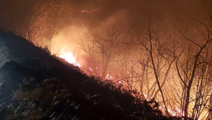 Karadeniz'in ciğerleri yanıyor ! Yangınları o terör örgütü üstlendi