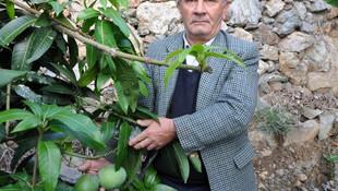 Deneme için diktiği ağaçlar, 45 bin lira kazandırdı