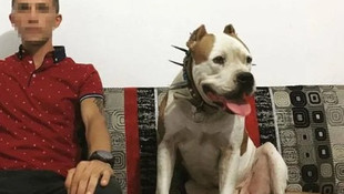 Ceset gömerken yakalanmıştı... 2 pitbull köpeğe el konuldu