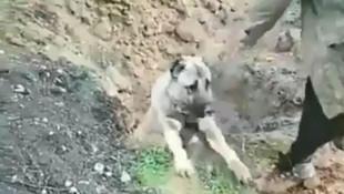 İsyan ettiren görüntüler ! O köpeğin sahibi serbest bırakıldı