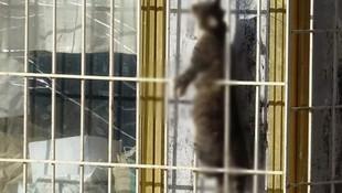 Kediyi çelik telle asarak öldürdüler !