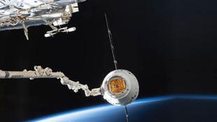 ''Süper fareler'' uzay istasyonuna ulaştı