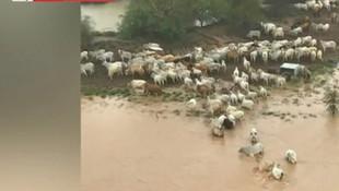 300 bin sığır sele kapılarak can verdi