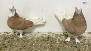 ''Güvercin'' tartışmasında kan döküldü