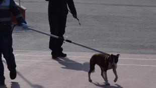Okuldaki pitbull saldırısının görüntüleri ortaya çıktı