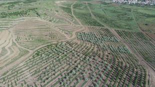 Atatürk Orman Çiftliği'nde 1 milyon metrekare daha imara açıldı