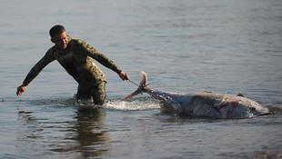 Marmara'da şaşırtan görüntü ! Kıyıya vurdular