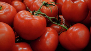 Soğan ve patatesten sonra domates korkusu !