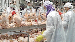 Beyaz et sektörüne ceza yağdı