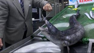 Marmara'da dev yılan balığı yakalandı