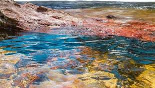 Beş renkli nehir görenleri büyülüyor: İşte sırrı